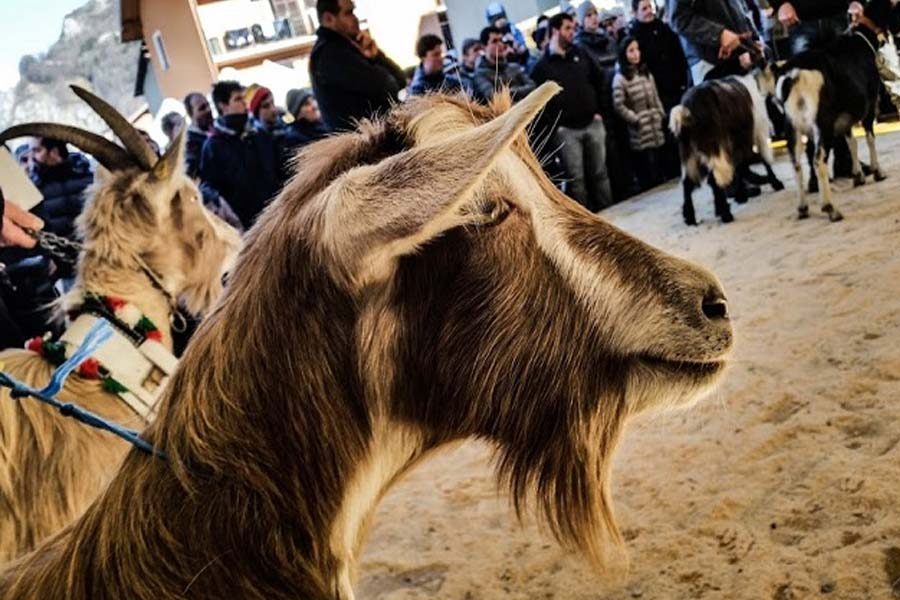 Fiera delle capre e dell'asinello ad Ardesio