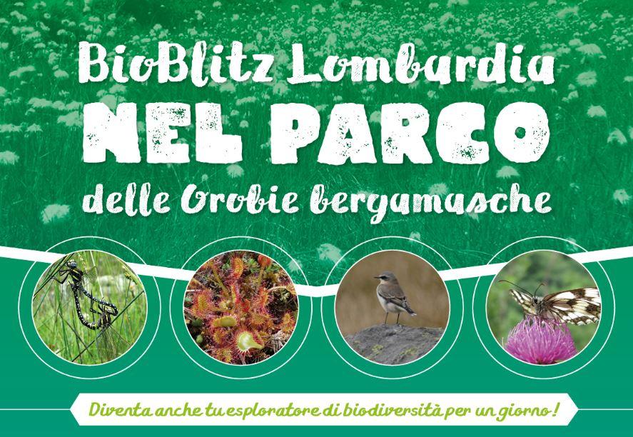 Bioblitz Nel Parco Delle Orobie Bergamasche Programma2
