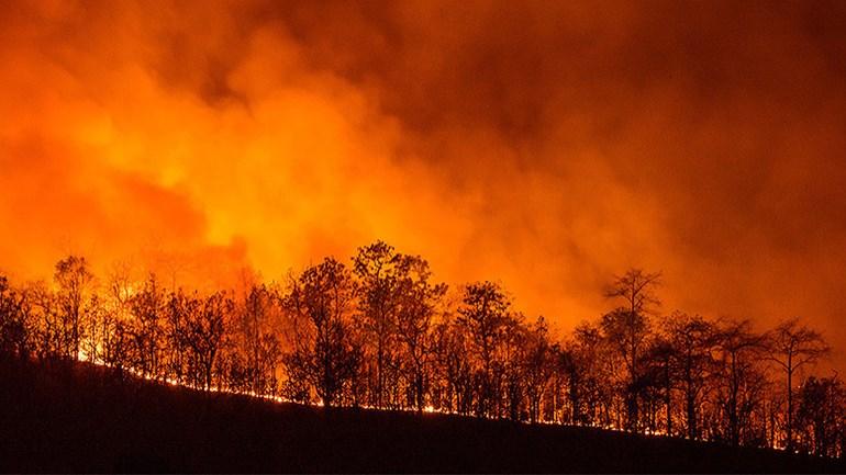 2017 11 25 Incendi Bochivi