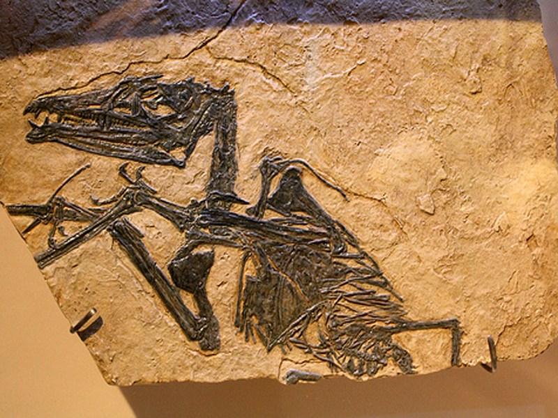 Apertura Parco Paleontologico