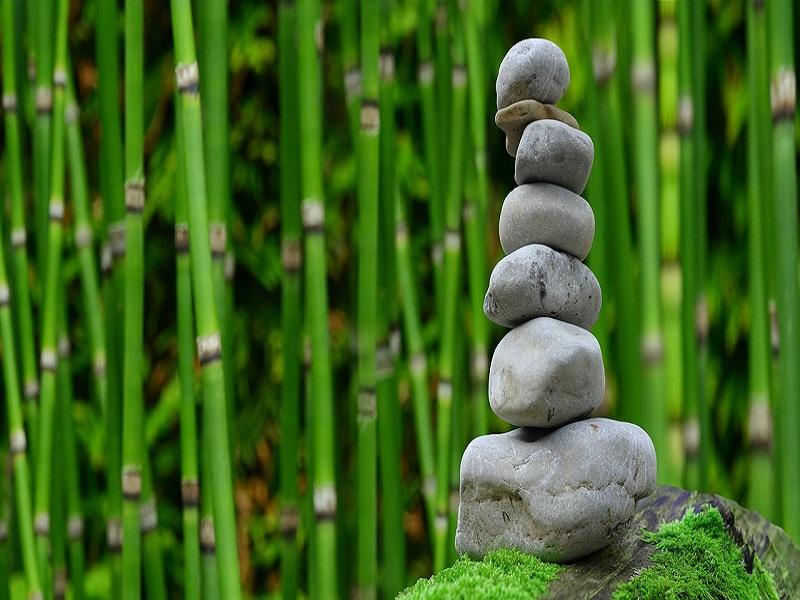 L'addestramento Nell'arte Della Meditazione