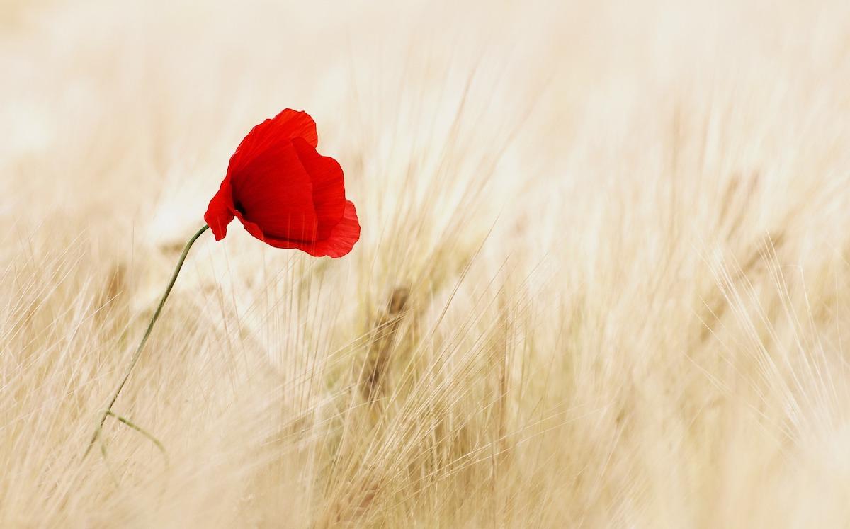 Nemmeno con un fiore