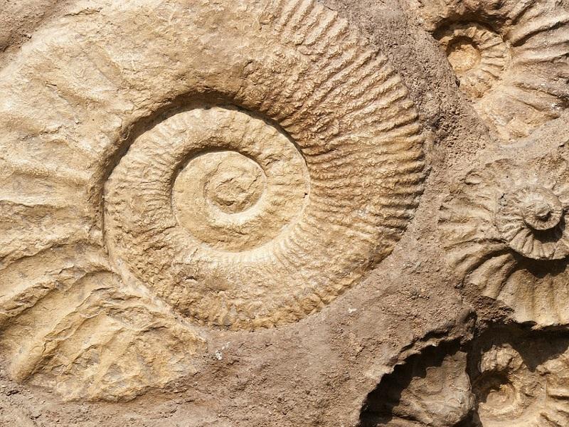 Cercare Fossili Che Passione!