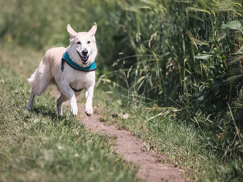Il Cane Etologia Anatomia E Alimentazione