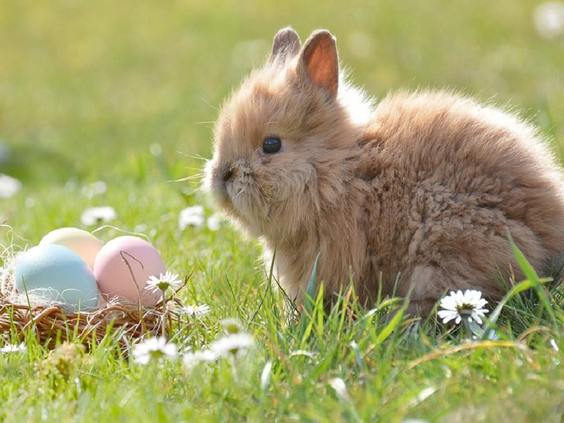Easter 2197043 960 720